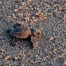Turtles 10 by JMerriman