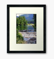 Lake swamp Framed Print