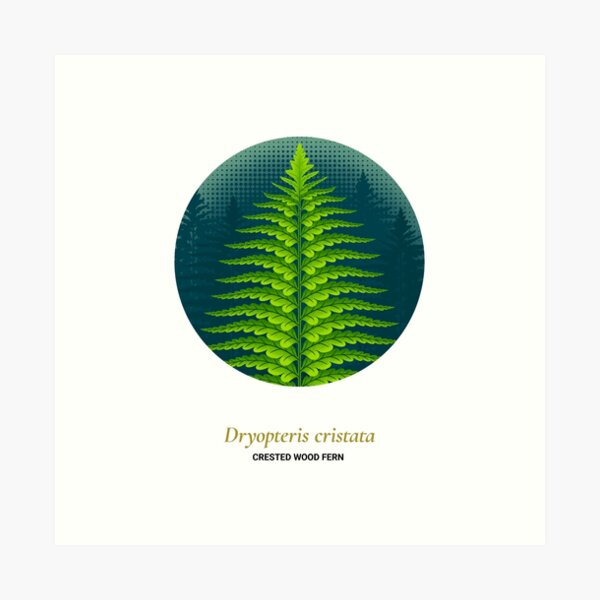 The Circles of Life: Crested Wood Fern Art Print