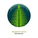 The Circles of Life: Crested Wood Fern by Franz Anthony