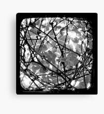 The Chocolate Vine Through The Viewfinder (TTV) Canvas Print