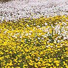 Strands of White, Block of Yellow by kalaryder