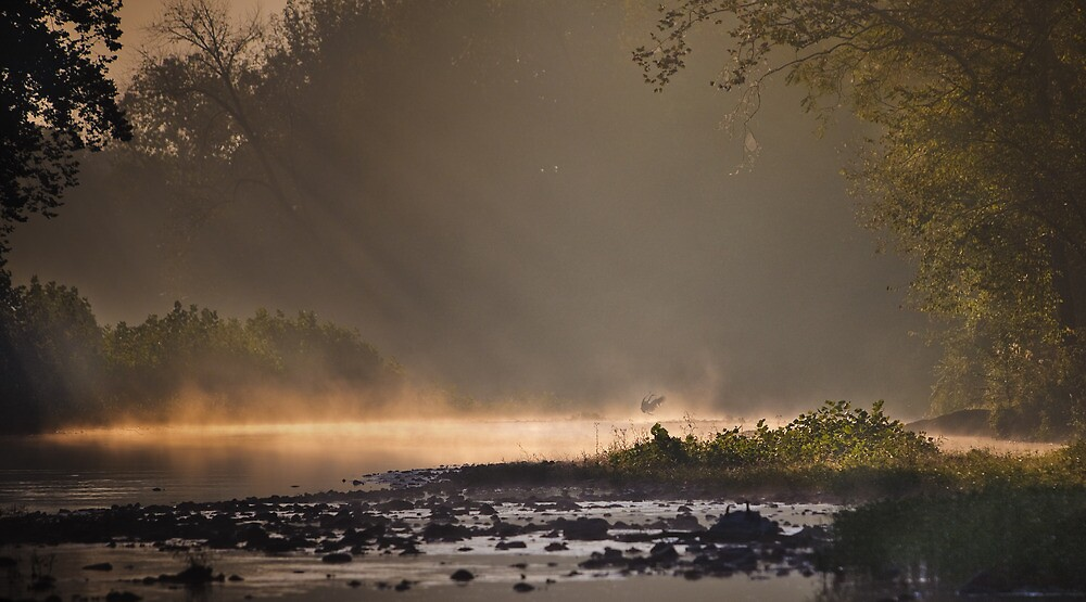 Great Blue Heron, River Mist by Steven David Johnson