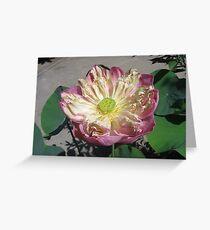 Mae Sot Lotus Greeting Card