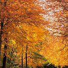 Autumn Gold by JEZ22