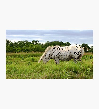 Spotted Beauty Photographic Print