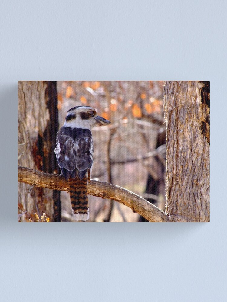 Alternate view of Kookaburra Dawn Canvas Print