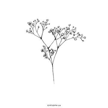 Gypsophile by ghjura