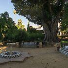Hiding from the Heat in Seville Spain - Jardines de Murillo Green Oasis by Georgia Mizuleva