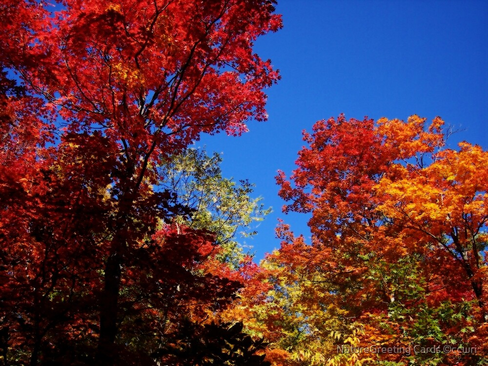 Autumn Fire by NatureGreeting Cards ©ccwri