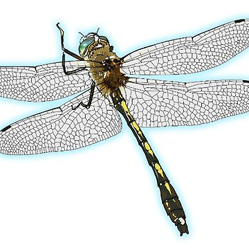 Dragonfly by TOMSREDBUBBLE