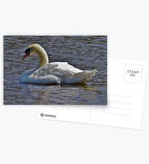 The Swan aka Cygnus Olor Postcards