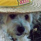 Aussie Dog by AmyCoomer