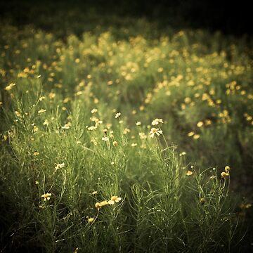 little wildflowers by rachelakelso