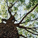 branching by Rachel Kelso