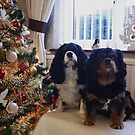 Happy Christmas from Charlie and Poppy ( my girls) by AnnDixon