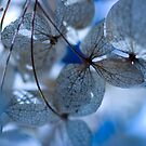 A blue feeling. by HelenaBrophy
