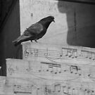 Bird Song by Christine Oakley