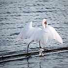 Egret On The Move With Supper by Cynthia48