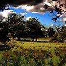Landscape Field by shakey123