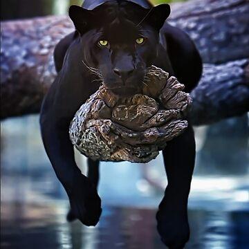 Black Cat by dawnmvd