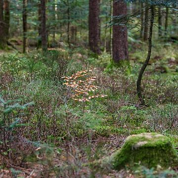 Forest natural view, trees and stumps with moss by sorokopud