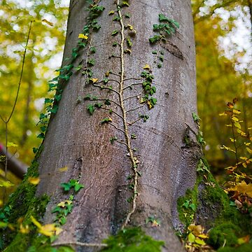 Beautiful trunk of the tree closeup view, autumnal forest by sorokopud
