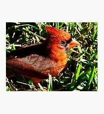Quilted Cardinal Photographic Print