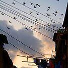 Where Pigeons Take Flight by eyesoftheeast
