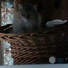 KITTY IN A BASKET! by Debra Willis