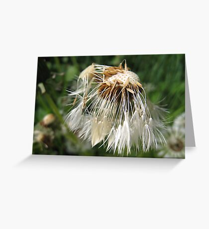 Not so Dandy-lion Greeting Card