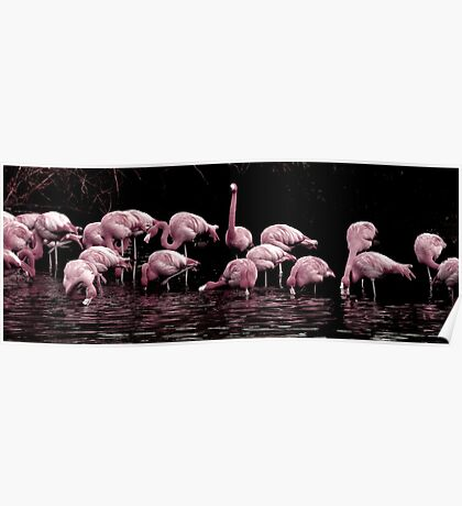 Pale Pink Panorama Poster