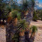 Cactus by Nancy Richard