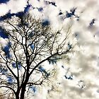 Single Tree Among The Clouds by daphsam