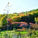 THE MANY COLORS OF AUTUMN  by JoAnnHayden