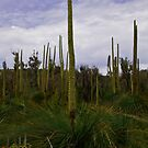 Grass Trees by orianne