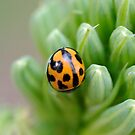 lady bug by gillyisme53
