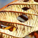 Leaf Behind by Betsy  Seeton