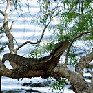 A water Dragon Lizard by gillyisme53