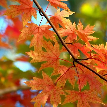 Autumn Leaves by DianaG