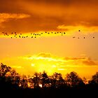A Flock of Geese in A Golden Sky by Jo Nijenhuis