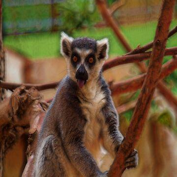 lemur by LuciaS