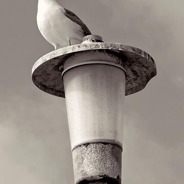 La Jolla Beach Seagull by DianaG