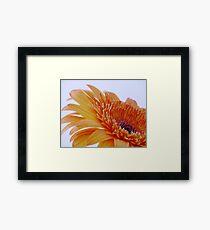 Orange Gerbera Flower Framed Print