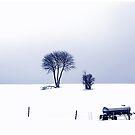 Winterschlaf ... Black Forest by Angelika  Vogel