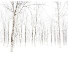Snowy Woods by randomdumping