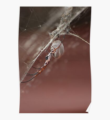 whyalla spider Poster