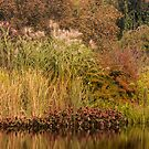Golden Autumn Grasses at the Water's Edge by Ryan McGurl