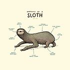 Anatomy of a Sloth by Sophie Corrigan