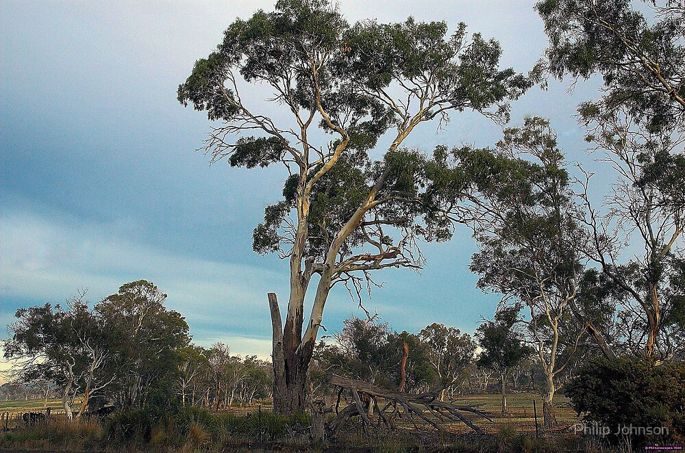 Strength - Roadside , Tasmania - The HDR Experience by Philip Johnson